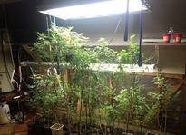 marijuana_indoor_lasd.JPG