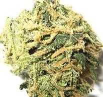 marijuana-bud-thumb-250x237.jpg