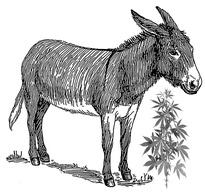 Donkey_WikiCommons-Pearson-Scott-Foresman.jpg
