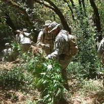 NFS-marijuana-grow.jpg