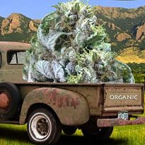 boulder.medical.marijuana.dispensary.205x205.jpg
