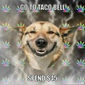 stoner-dog-meme-generator-go-to-taco-bell-spend-45-277068-thumb-350x350.jpg