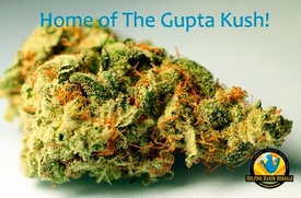 GuptaKush.jpg
