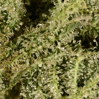UKcheese-closeup.jpg