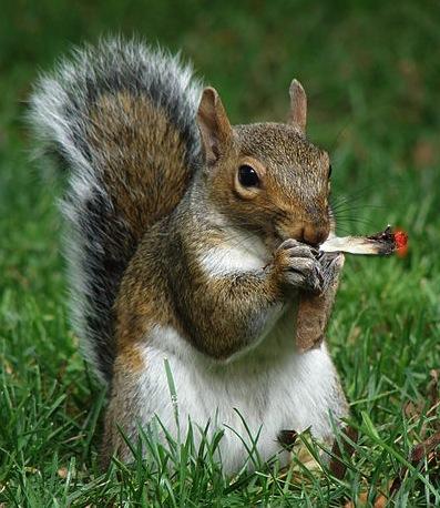 potsquirrel-wikicommonsopensource.jpg