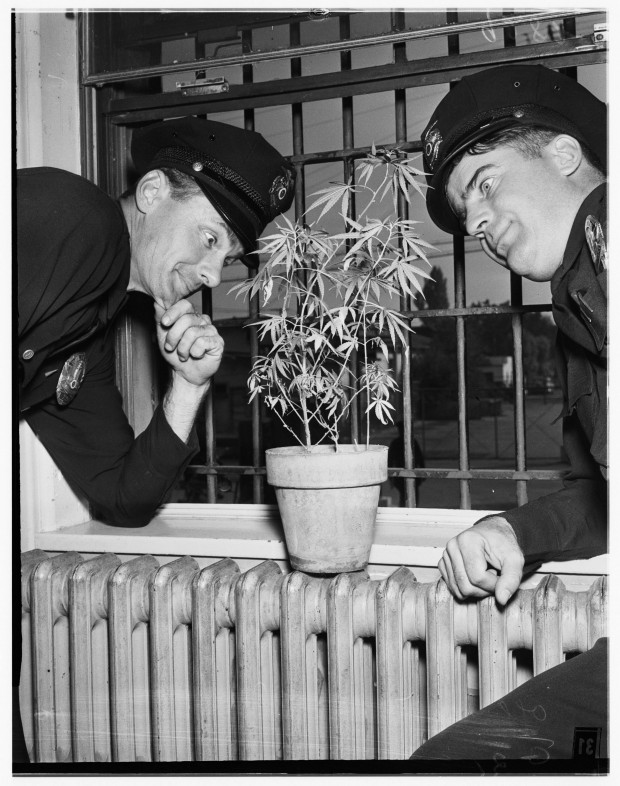 Marijuana-in-Los-Angeles-Jail-3-620x786.jpg