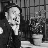 square-1951-marijuanacop.jpg