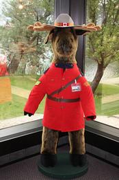 Canadian mountie moose flikr.jpg