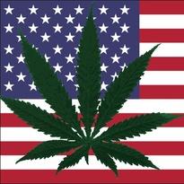 Thumbnail image for american-flag-weed.tokeofthetown2013.jpg