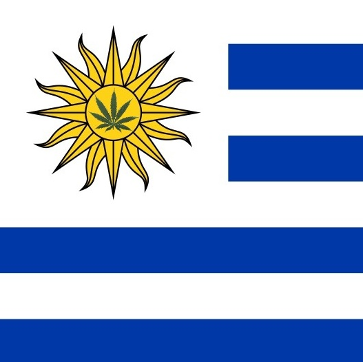 legalizing marijuana in uruguay Uruguay´s proposed marijuana law would legalize the sale and consumption of marijuana, and also allow people to grow up to six marijuana plants in their home.