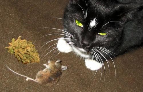 evilcat-flickrzuggup.jpg