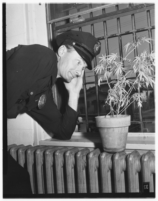 Marijuana-in-Los-Angeles-Jail-2-620x789.jpg