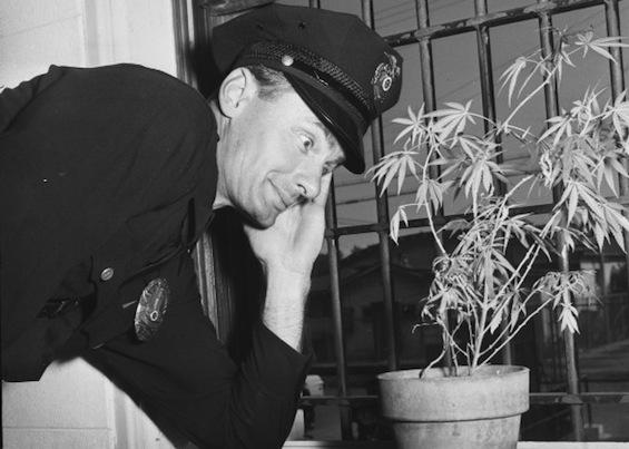 dumblookingcop-potplant-jail.jpg