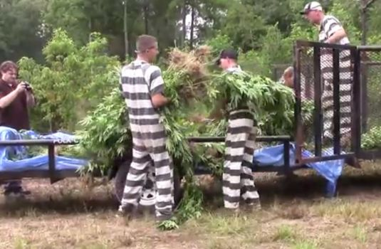 youtube-prisonserpot.jpg