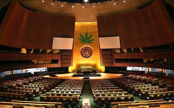 UnitedNations-weed.jpg