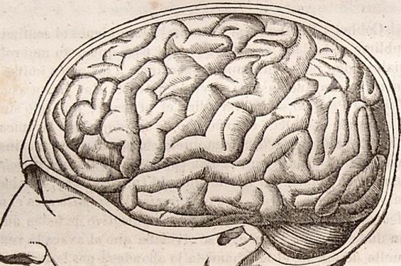 antique-brain-slim.jpg