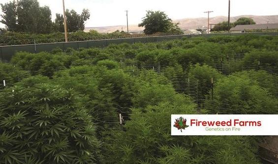 fireweedfarms.jpg