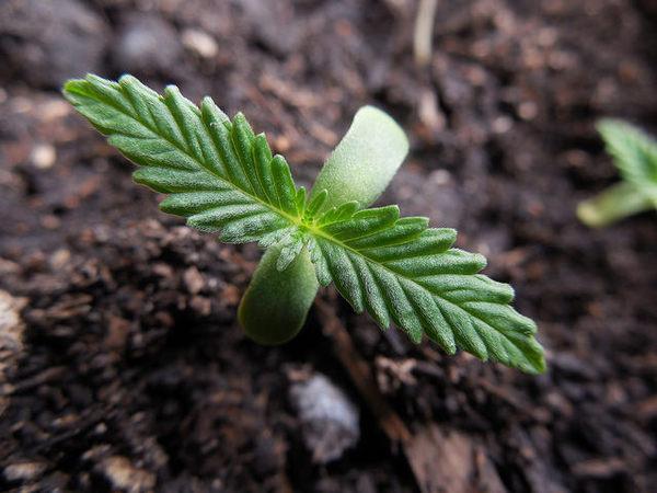 weedsprout.jpg