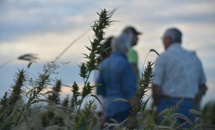hemp farming in Colorado