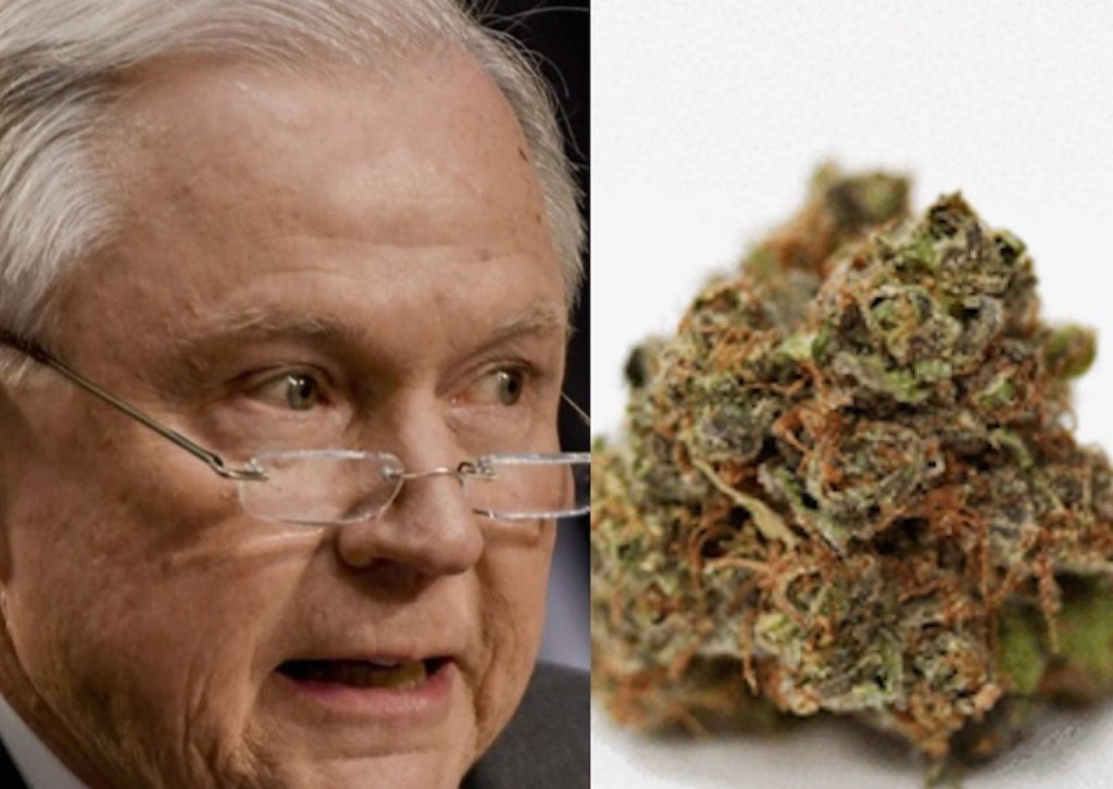 jeff sessions strain