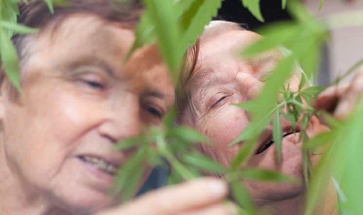 marijuana smells
