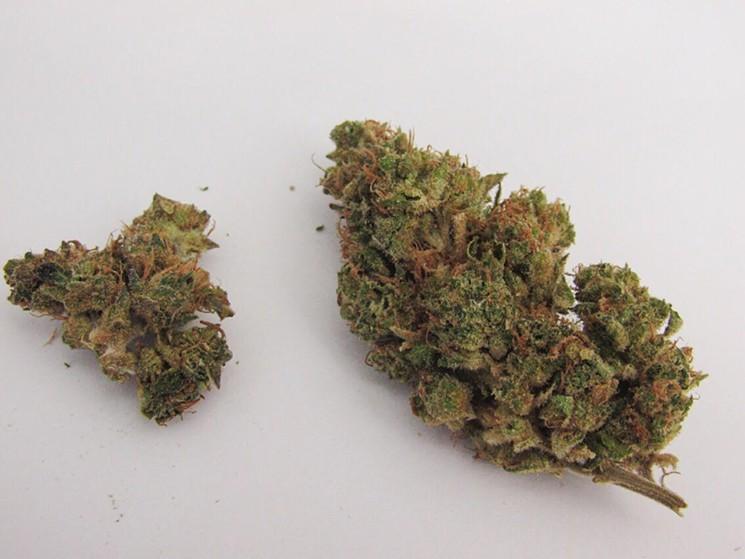 opium strain