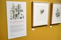 Cannabis Illustrations