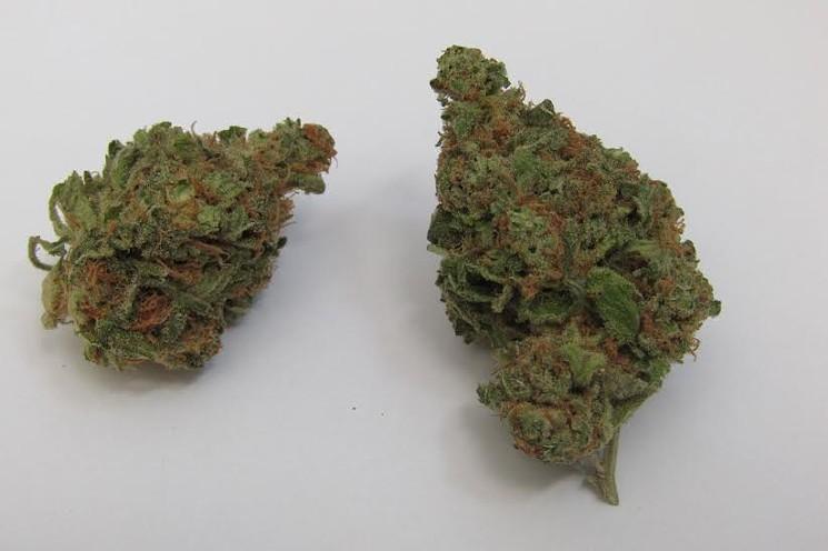 Marijuana Growing Tips & Tricks | Toke of the Town