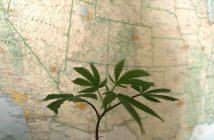 marijuana.map