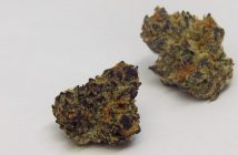 purple_punch